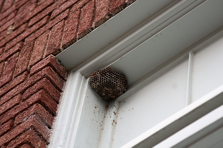 We provide a wasp nest removal service for domestic and commercial properties in Lancaster Gate.